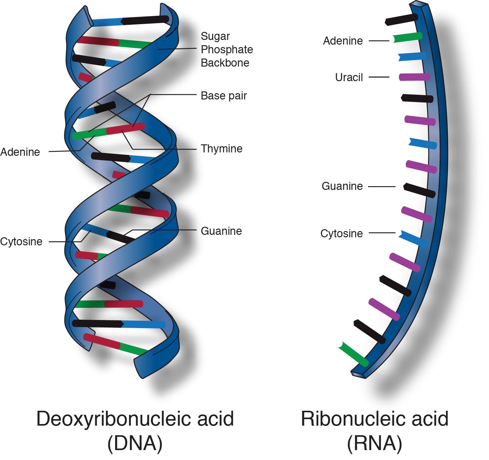 Виды ДНК