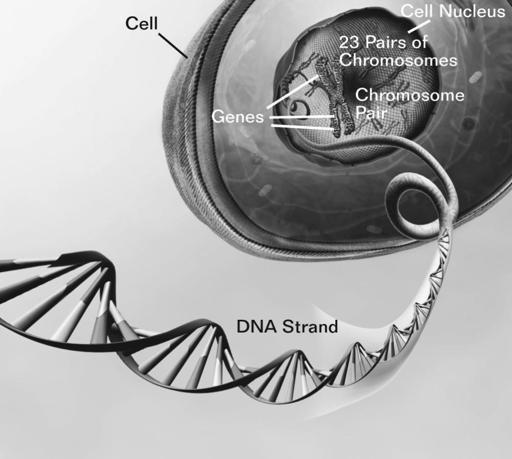 Половые мутации как причина генных заболеваний
